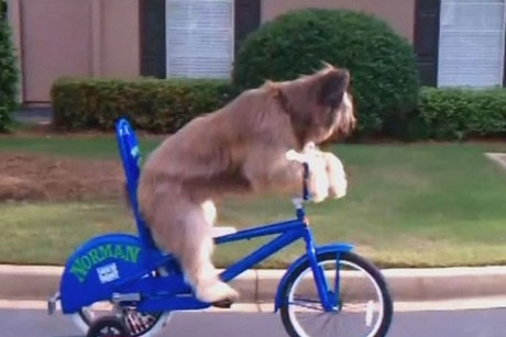 Dog Called Norman Learns To Ride A Bicycle