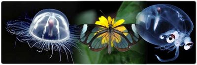 Amazing Transparent Animals from Around the World
