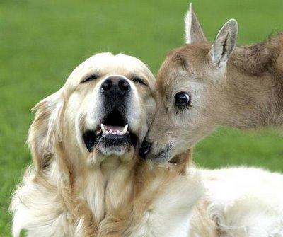 cbd oil vs hemp oil for dogs