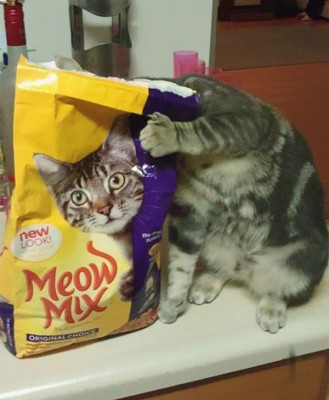 cat with cat food image