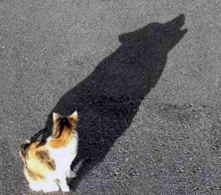 cat with dog shadow