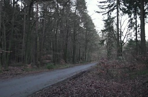 mercedes benz car hiden on a forest road