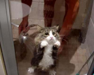 Funny And Cute kitty Cats Pictures 1