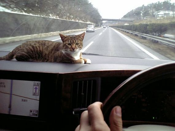 Funny And Cute kitty Cats Pictures 10