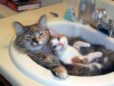 20 Funny And Cute kitty Cats Pictures