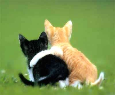 Funny And Cute kitty Cats Pictures 13