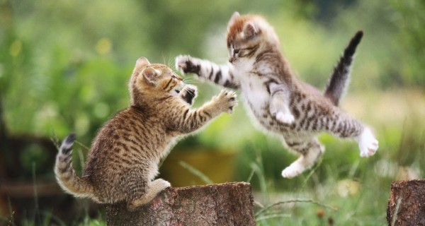 Funny And Cute kitty Cats Pictures 14
