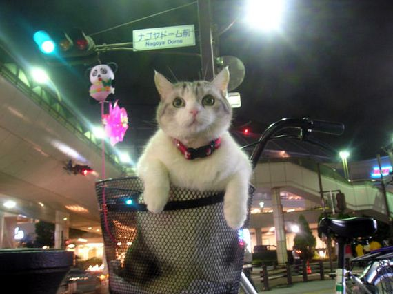 Funny And Cute kitty Cats Pictures 2