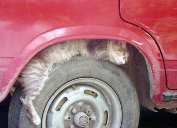 Funny And Cute kitty Cats Pictures 20