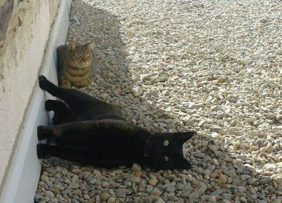 Funny And Cute kitty Cats Pictures 4