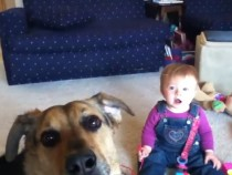 5 Funny YouTube Videos Of Babies Laughing At Dogs