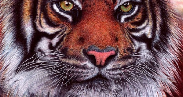 Portuguese Artist Draws Amazing Realistic Pictures With Pens
