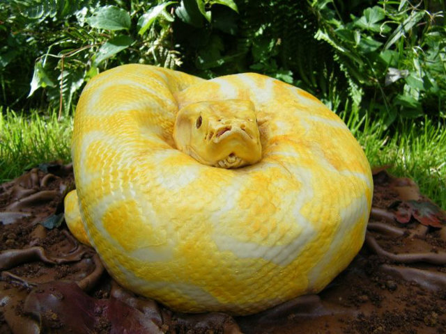 Snake Cake Looks So Real You Are More Likely To Run Than Eat It 4