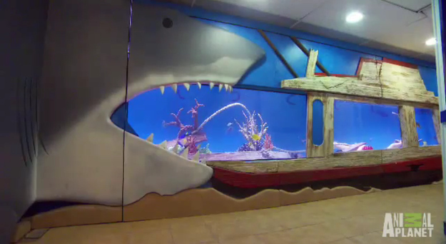 Tracy morgan shows us his shark tank in his basement for Morgans fish house