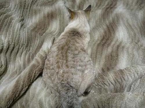 cat camoflauge