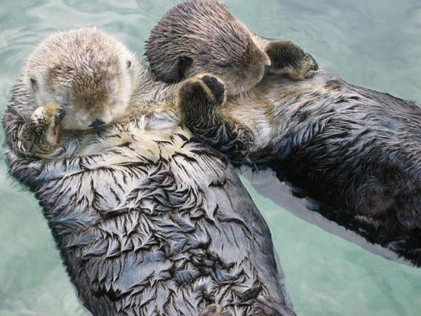 25 Amazing And Interesting Animal Facts 12