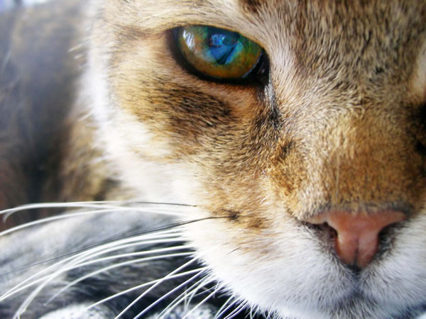 25 Amazing And Interesting Animal Facts 13