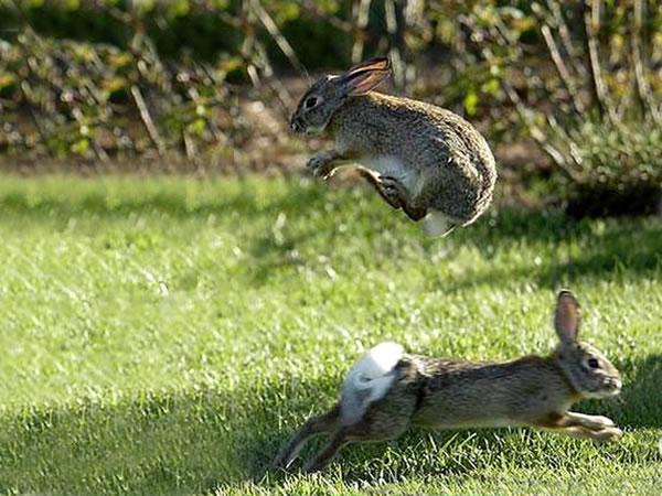 When Rabbits Jump In Excitement, It's Called A Binky