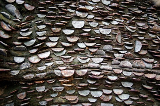 Mysterious Coin Covered Wishing Trees In The UK 4