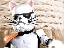 Star Wars Parody Video – Paw Warz