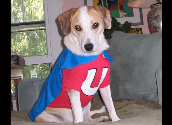 16 Cute And Adorable Dogs Dressed Up As Superheroes 5