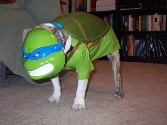 16 Cute And Adorable Dogs Dressed Up As Superheroes 4