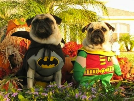 16 Cute And Adorable Dogs Dressed Up As Superheroes 3