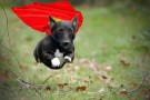 15 CUTE DOGS DRESSED AS SUPERHEROES