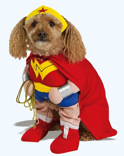 16 Cute And Adorable Dogs Dressed Up As Superheroes 2