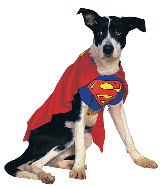 16 Cute And Adorable Dogs Dressed Up As Superheroes 1