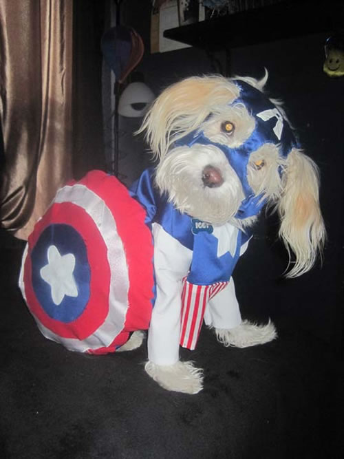 16 Cute And Adorable Dogs Dressed Up As Superheroes 13