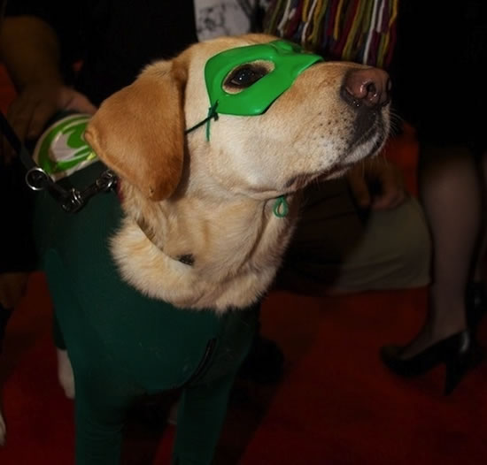 16 Cute And Adorable Dogs Dressed Up As Superheroes 10