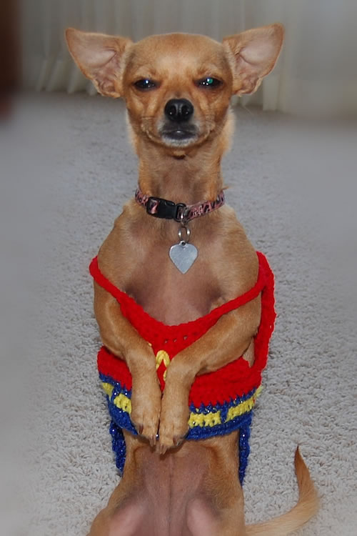 16 Cute And Adorable Dogs Dressed Up As Superheroes 9