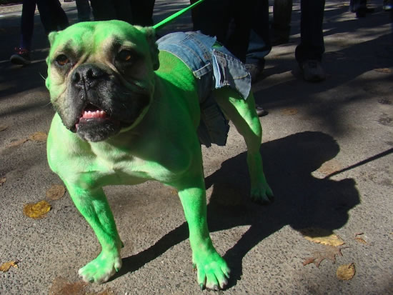 16 Cute And Adorable Dogs Dressed Up As Superheroes 8