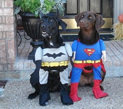 15 Cute And Adorable Dogs Dressed Up As Superheroes 1