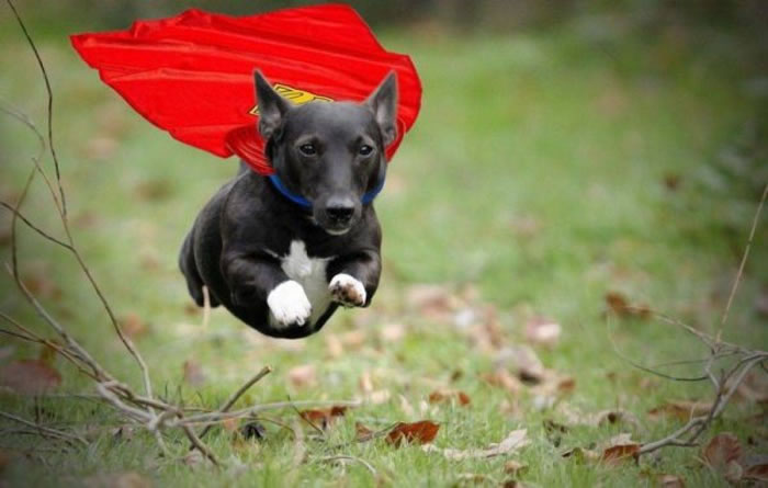 15 Cute And Adorable Dogs Dressed Up As Superheroes