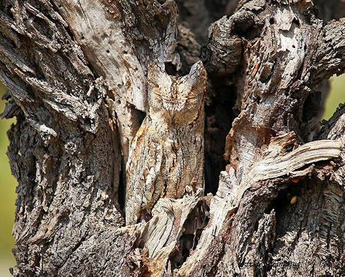 17 Animals That Are Masters Of Camouflage - Can You See Them 1