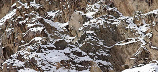 17 Animals That Are Masters Of Camouflage - Can You See Them 16