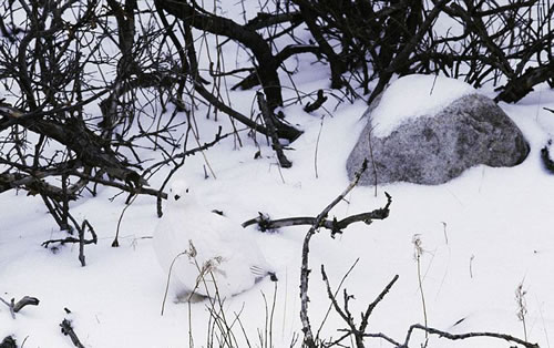 17 Animals That Are Masters Of Camouflage - Can You See Them 4