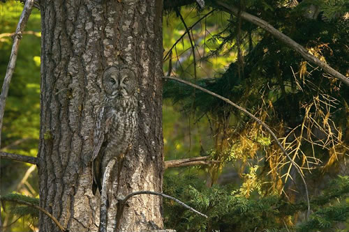 17 Animals That Are Masters Of Camouflage - Can You See Them