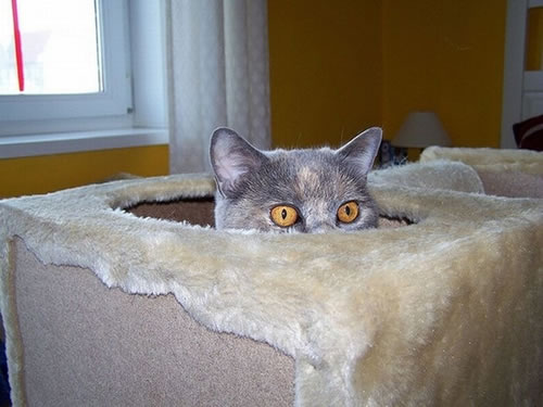 20 Cats Who Fail At Playing Hide And Seek