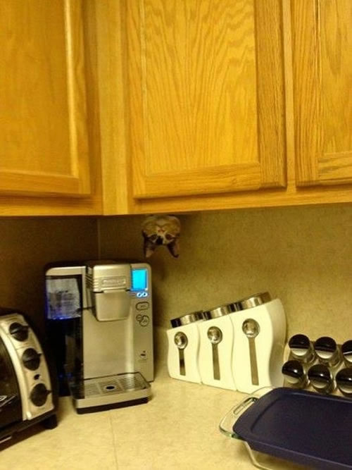 20 Cats Who Fail At Playing Hide And Seek 10