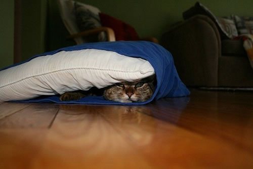 20 Cats Who Fail At Playing Hide And Seek 11