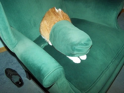 20 Cats Who Fail At Playing Hide And Seek 12