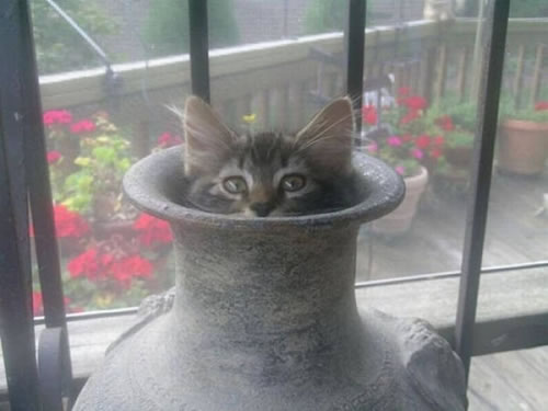 20 Cats Who Fail At Playing Hide And Seek 13