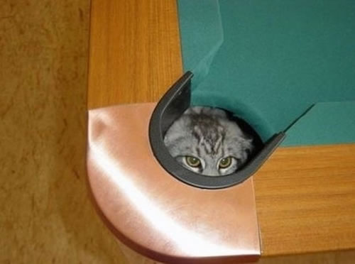 20 Cats Who Fail At Playing Hide And Seek 15