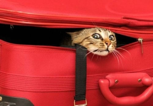 20 Cats Who Fail At Playing Hide And Seek 16
