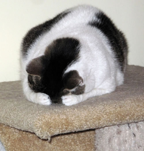 20 Cats Who Fail At Playing Hide And Seek 18