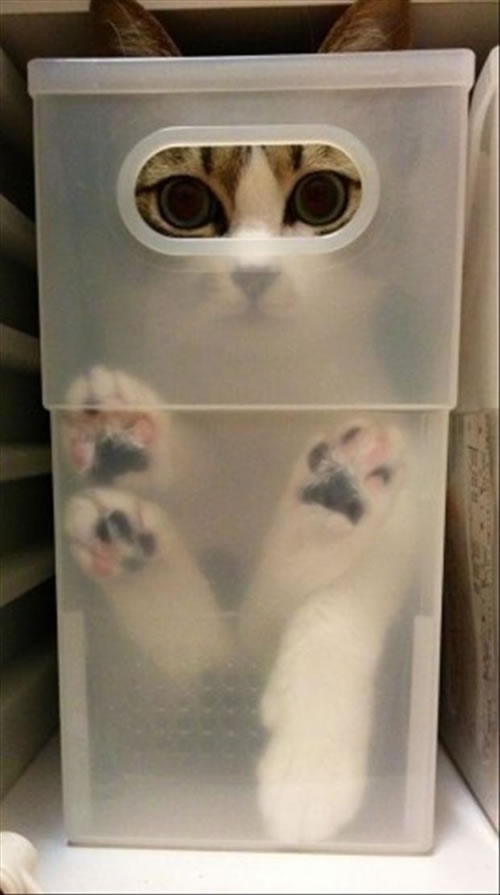 20 Cats Who Fail At Playing Hide And Seek 19
