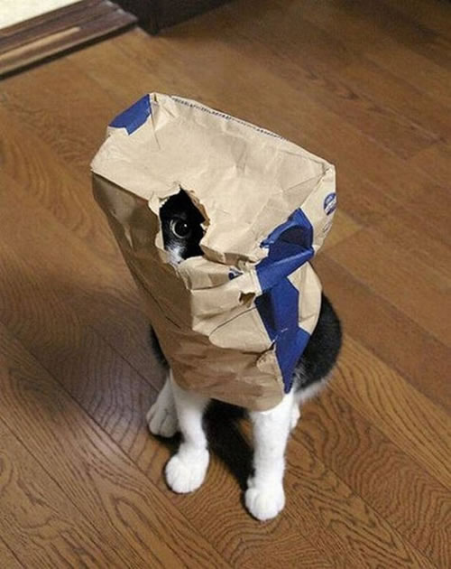 20 Cats Who Fail At Playing Hide And Seek 3